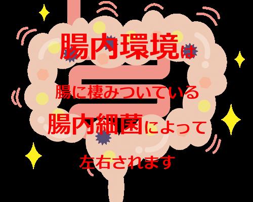 BurnesStyle(バーネススタイル):腸内環境を改善するプログラム